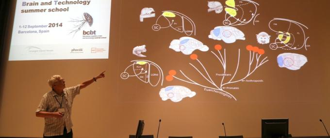 Jon Kaas shows cortical homologies in different mammalian brains